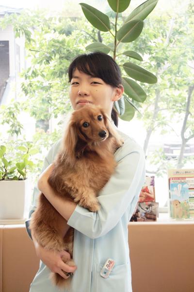 獣医師 澤田光里